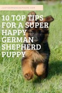 10 Tips for a super happy german shepherd puppy