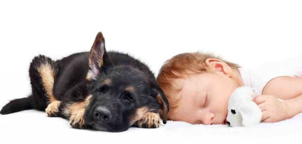 Are German Shepherds Good With Babies?