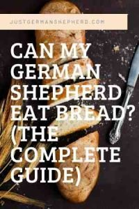 Can my German Shepherd Eat Bread? (The complete guide)