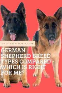 German Shepherd Breed Types Compared - Which is Right for me?
