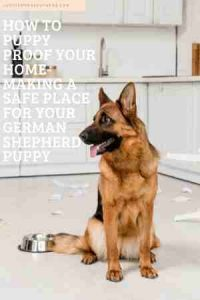 how to puppy proof your home- making a safe place for your German Shepherd puppy