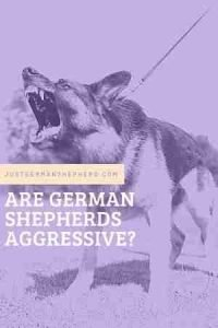 Are German Shepherds Aggressive?