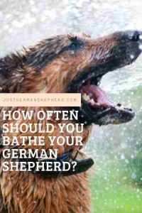 How often should you bathe your German shepherd?